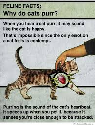 Cat Facts Meme - feline facts why do cats purr weknowmemes