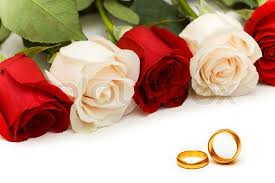red rose rings images Roses and wedding rings isolated on white stock photo colourbox jpg