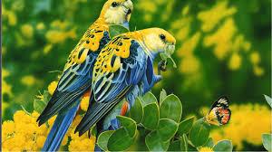 Discount Wallpaper Borders Images Of Love Birds Blue Wallpaper Sc