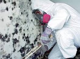 mold inspection chicago and milwaukee mold remediation skyline