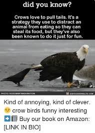 Funny Bird Memes - 25 best memes about birds funny birds funny memes