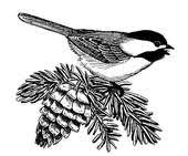 chickadee clipart collection 60