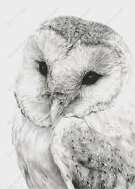 barn owl sketch art print isaiah k stephens drawings