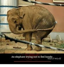 Lonely Meme - an elephant trying not to feel lonely world meme on sizzle