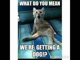 Dog Cat Meme - funny cats and dogs memes youtube