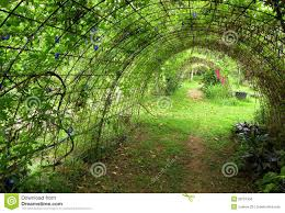 climbing plant natural frame stock photos images u0026 pictures
