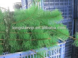 pet pvc plastic artificial pine needles used for