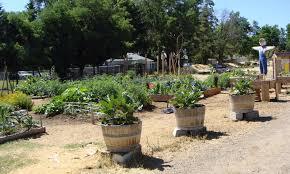 Botanical Gardens Volunteer by Volunteer At The Community Garden U2013 Siskiyou Gardens Parks And
