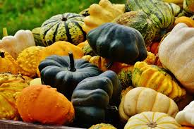 pumpkin decoration images free images flower orange food harvest produce vegetable