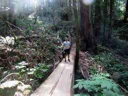 Muir Woods Map Muir Woods National Monument Mill Valley Foodie Loves Fitness