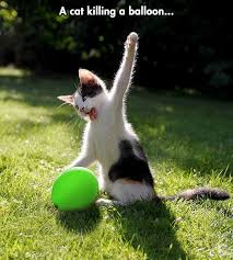 Balloon Memes - cat meme 014 killing balloon comics and memes