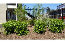 Twin Pines Landscaping by Twin Pines Apartments Rentals Houston Tx Apartments Com