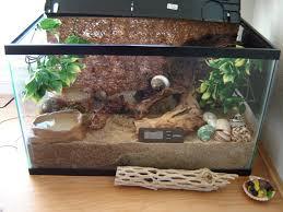 Habitat Home Decor by 123 Best Hermit Crab Images On Pinterest Hermit Crabs Hermit