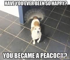 Be Happy Memes - hot memes funny memes