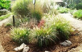 ornamental grasses loudoun county master gardeners