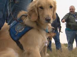Comfort Golden Therapy Dogs Bring Comfort To Sutherland Springs Wgrz Com