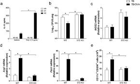 M2 macrophages or IL 33 treatment attenuate ongoing Mycobacterium