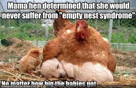 Hen Meme - mama hen determined that she would never suffer from empty nest