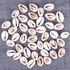 Accessories For Home Decoration Small Sea Shells Promotion Shop For Promotional Small Sea Shells