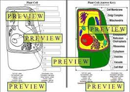 plant cell coloring answer key questions ghost study
