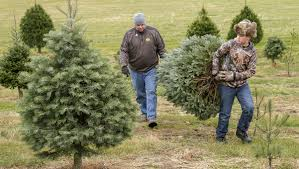 holiday traditions live on at iowa christmas tree farms the gazette