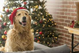 dog christmas christmas market for dogs coming to london the independent
