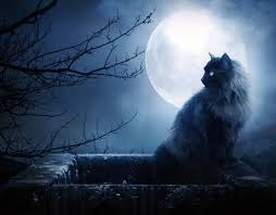 black cat halloween wallpaper moonlight cat halloween wallpaper