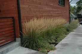 creative uses of ornamental grass rick laughlin pulse linkedin