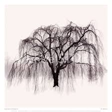 willow tree drawing weeping willow tree drawings pic 20
