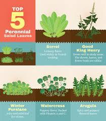 planting perennials in the garden fix com