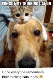 Thinking Cat Meme - 25 best memes about ive got my thinking cat on ive got my