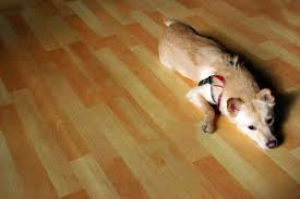 the best hardwood floor for dogs pets