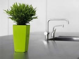 vasi da interno vasi per interno vasi e fioriere