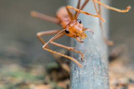 do ants carry disease get the facts about ant diseases