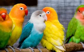birds images Birds love wallpaper hd wallpapers jpg