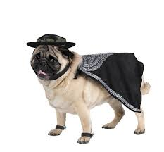 Dog Halloween Costumes Girls 111 Funny Dog Costumes Images Pet Costumes