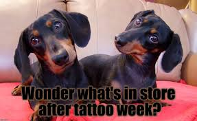 introducing dachshund week feb 2nd to feb 9 imgflip
