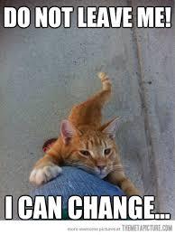 Cat Hug Meme - please stay the meta picture