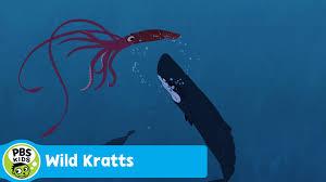 wild kratts whale vs giant squid pbs kids youtube