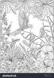 tropical coloring pages tropical wild birds plants tropical garden stock vector 421599547