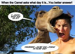 Hump Day Camel Meme - hump day imgflip