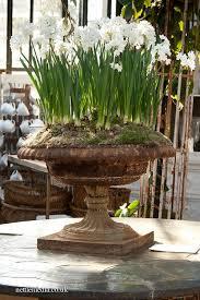 best 25 garden urns ideas on pinterest small garden urns