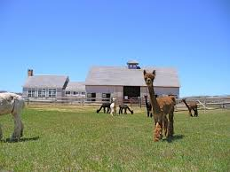 Massachusetts wildlife tours images 5 fantastic factory tours you can only take in massachusetts jpg