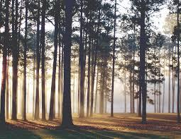 Alabama forest images American forest foundation blog jpg