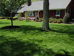 tree and shrub service removal and trimming suffolk county