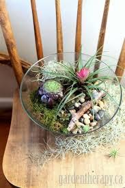 the 25 best terrarium bowls ideas on pinterest small succulent