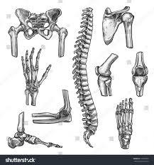 bone joints sketches set human skeleton stock vector 713633950