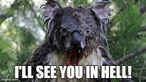 High Koala Meme - beautiful high koala meme angry koala meme memes kayak wallpaper