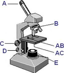 Parts Of A Compound Light Microscope Microscope Quiz
