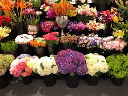 farm fresh flowers 25 best farm fresh flowers in atlanta images on